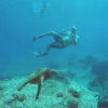 Best Places to Snorkel on Oahu's North Shore