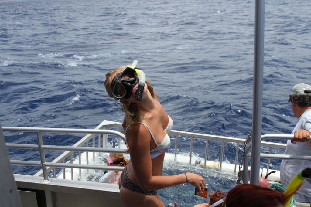 emily_shark_cage_tours_haleiwa_north_shore_backpackers